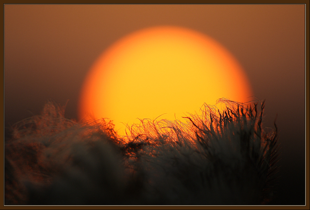 640x434_2229_Обнимая_Солнце_sun_evening_photo_photography_digital_art (640x434, 202Kb)