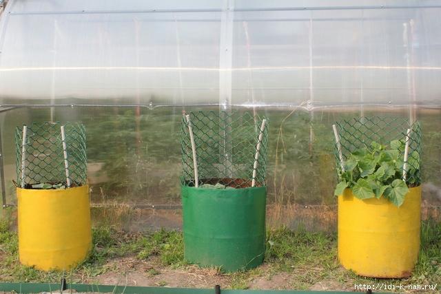 огуречные секреты, как выращивать огурцы, как ухаживать за огурцами, как получить хороший урожай огурцов,