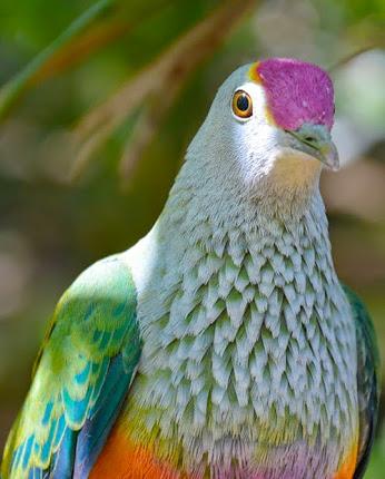 1aBird=taronga_zoo (346x430, 147Kb)