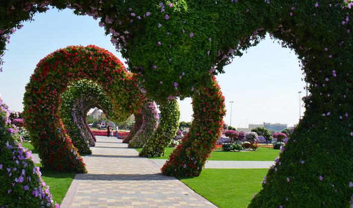 Dubai_Miracle_Garden_10 (700x411, 149Kb)