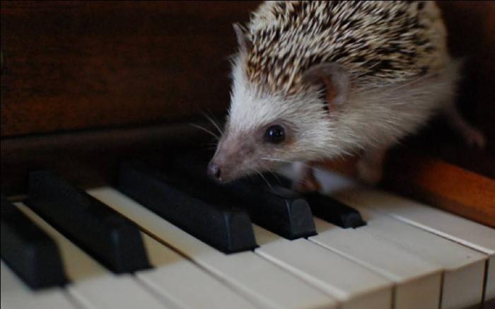 Hedgehog (700x437, 153Kb)