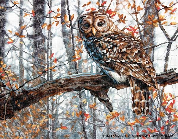 Stitchart-Wise-Owl0 (600x468, 367Kb)