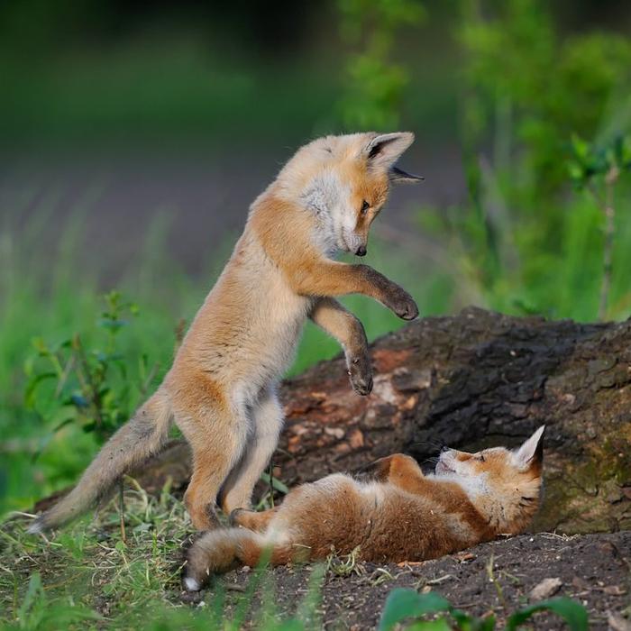 животные фото 1 (700x700, 433Kb)