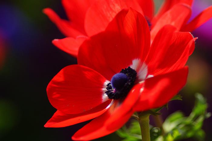 nice_flowers_16 (700x467, 82Kb)