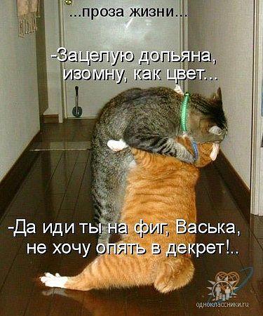5053532_korova (640x360, 3112Kb)/5053532_kotcelyet (375x450, 45Kb)