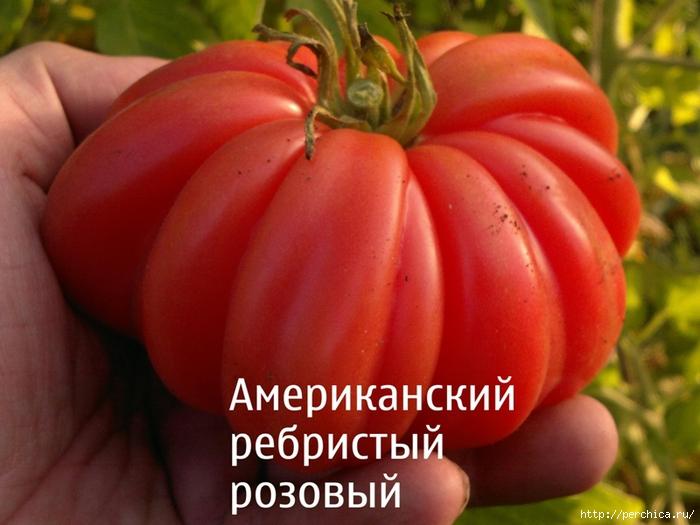 4979645_16011338 (700x525, 257Kb)