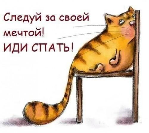 3180456_kot_1_ (500x447, 40Kb)