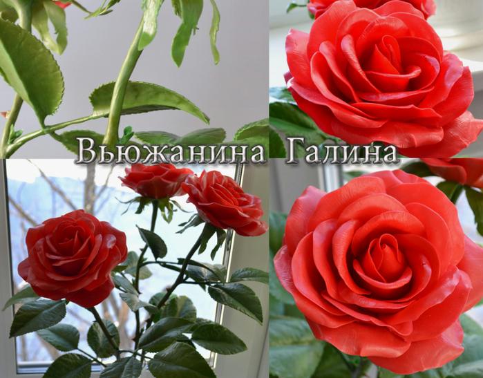 Розы для Жении 1 (700x547, 472Kb)