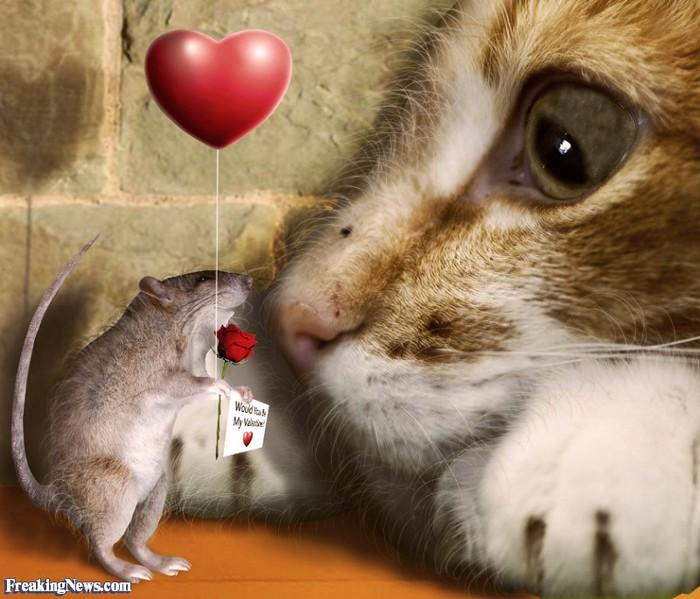 Стихотворения коты и мыши