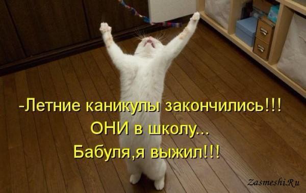 5680197_123Kanikulyzakonchilis_1_1_ (600x379, 58Kb)