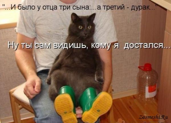 5680197_1589Kotvsapogah_1 (600x433, 51Kb)
