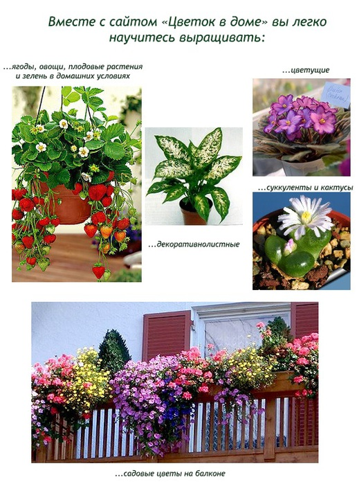 Какие цветы не стоит держать дома