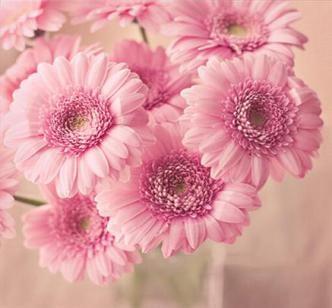 Цветы/3424885_0_i (332x308, 30Kb)