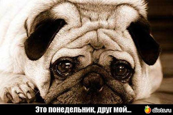 3906024_443989_93855550x500 (700x465, 93Kb)