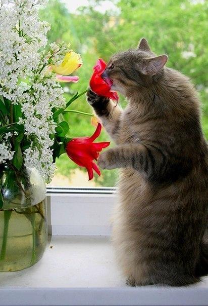 не могла пройти мимо 13 цветы (412x604, 230Kb)