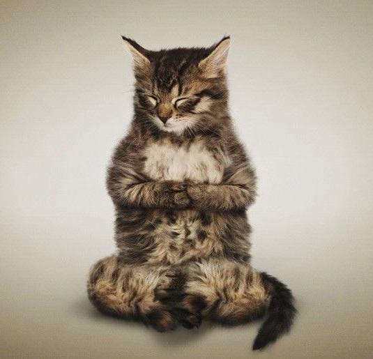 cat-fun-cat-yoga (535x515, 71Kb)