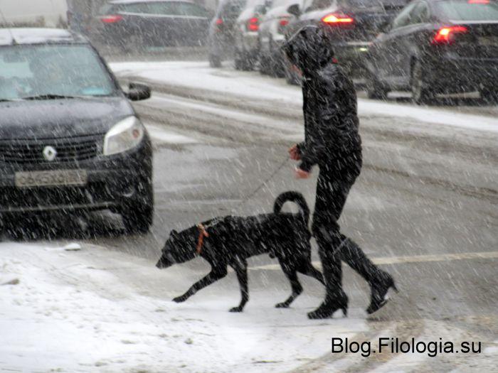 Девушка с черной собакой в метель на улице в Москве (700x525, 59Kb)