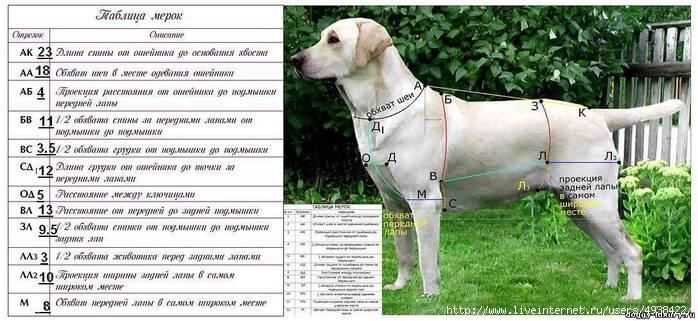 выкройки одежды для собак-попонка