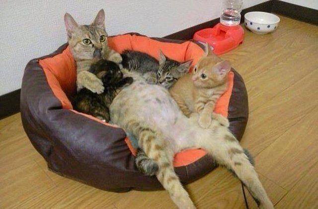 кошка-мама (640x421, 44Kb)