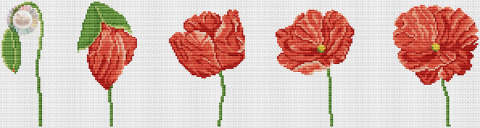 Wild Poppy (700x188, 159Kb)