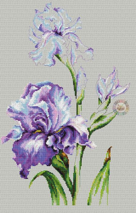 Irises (448x700, 421Kb)