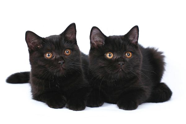 Чёрные котята (600x400, 98Kb)