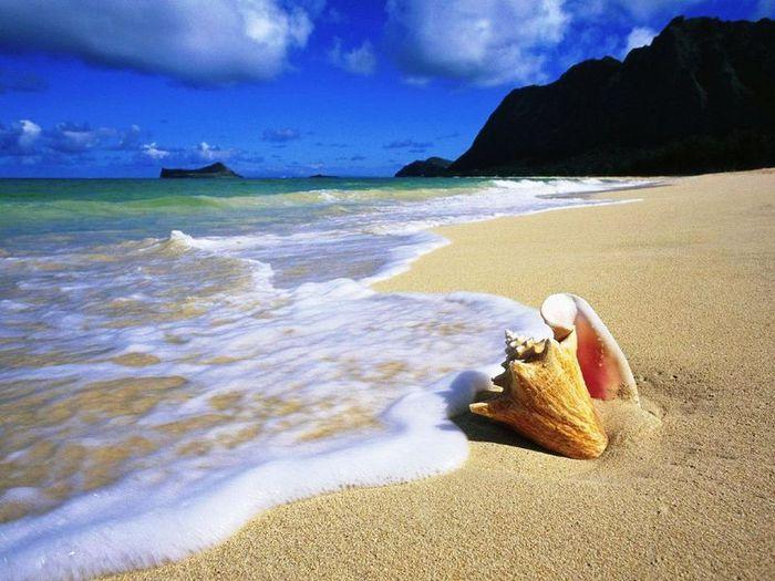 2899461_57811_4335220_Conch_Shell_Oahu_Hawaii_1280x960 (700x525, 69Kb)