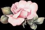 роза5 (150x101, 23Kb)