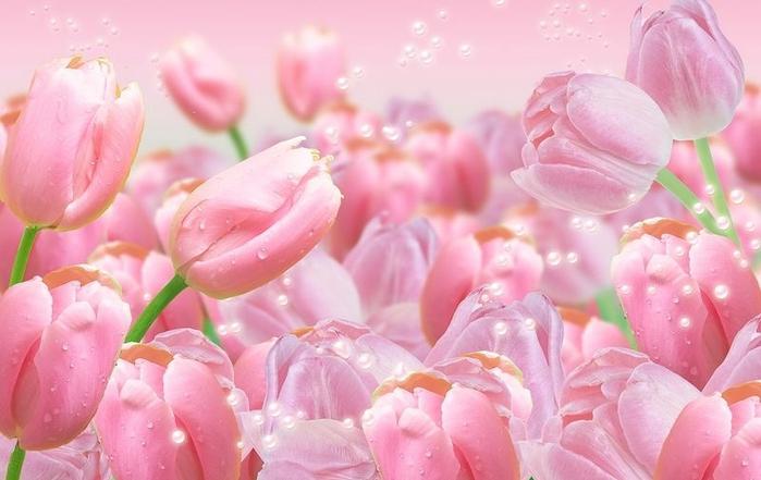 pink_tulips23 (660x441, 197Kb)