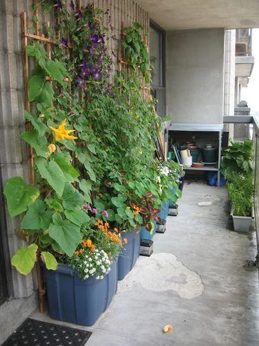 контейнерный сад (375x500, 169Kb)