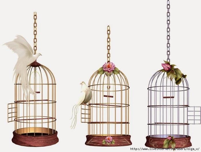 клетки фото для птиц