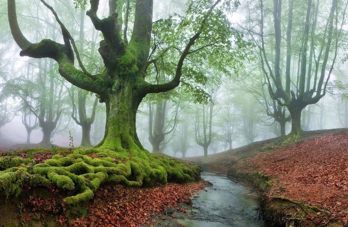 Gorbea Natural Park (700x457, 410Kb)