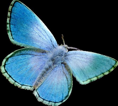 бабочка3 (500x449, 268Kb)