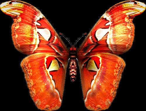 бабочка8 (500x380, 269Kb)