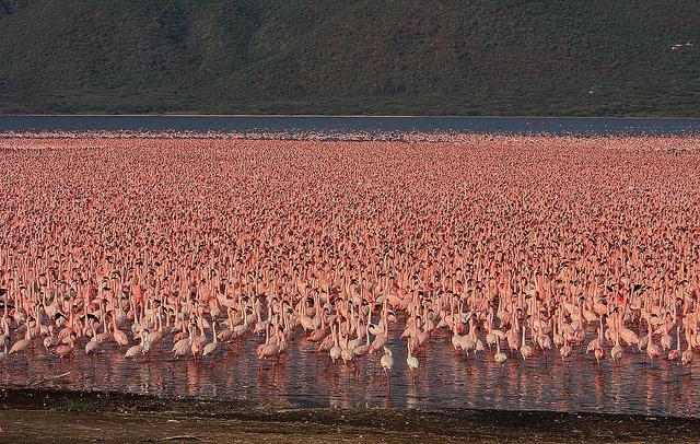 Миллион розовых фламинго1 (640x406, 639Kb)