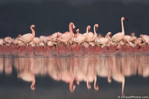 Миллион розовых фламинго5 (480x320, 83Kb)