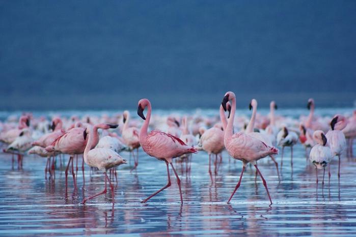 Миллион розовых фламинго11 (700x466, 309Kb)