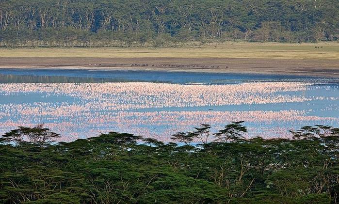 Миллион розовых фламинго12а (700x421, 404Kb)