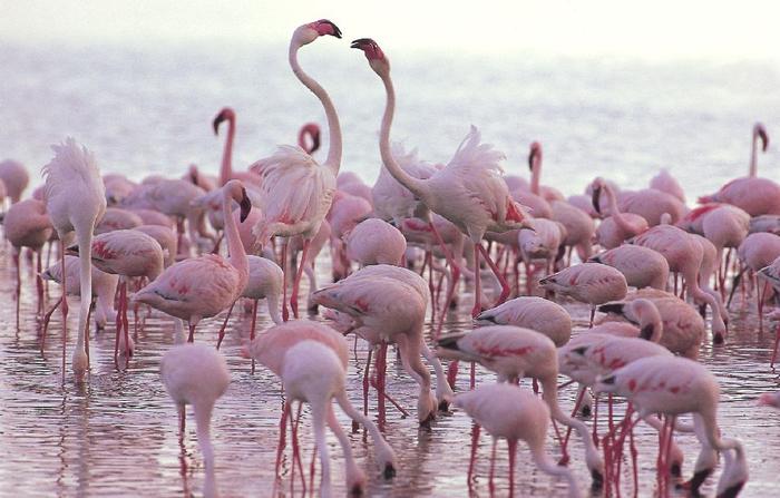 Миллион розовых фламинго13 (700x447, 322Kb)