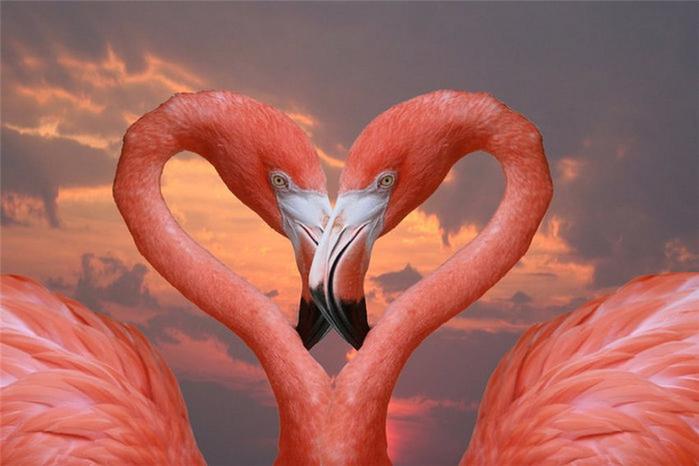 Миллион розовых фламинго20 (700x466, 280Kb)