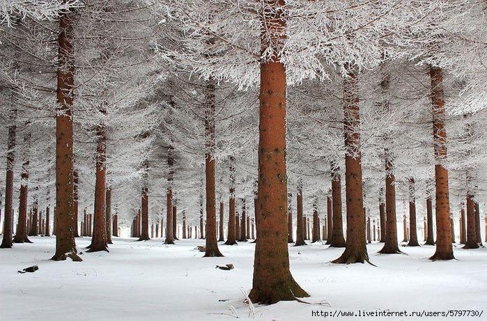 WinterLandscapes02 (700x461, 386Kb)