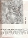 Превью 1 (508x700, 534Kb)
