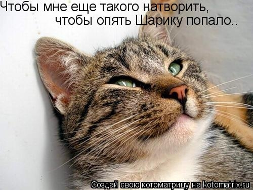 1353125574_u21y53t4ekqnu76c (500x375, 126Kb)