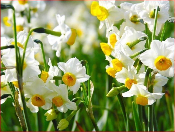цветочки (700x528, 72Kb)
