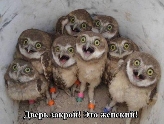 smeshnie_kartinki_14232279199 (550x418, 167Kb)