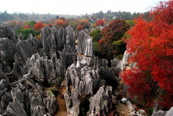 shilin-stone-forest-china-3 (600x405, 103Kb)