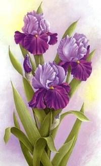 87857347_75986278_3035399_993377_flower021b (200x328, 65Kb)