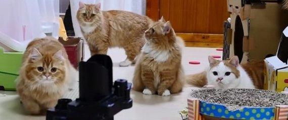 n-CATS-VS-ROBOTS-large570 (570x238, 31Kb)