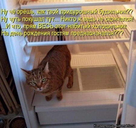 1416371954_kotomatritsa_53 (450x423, 119Kb)