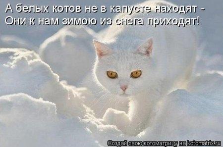 1416371956_kotomatritsa_tx (450x297, 69Kb)